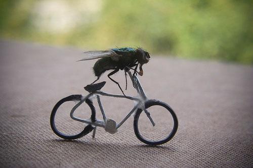 fly10